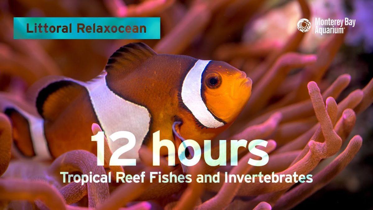 12 Stunden eines tropischen Korallenriffs mit Fischen und entspannender Musik