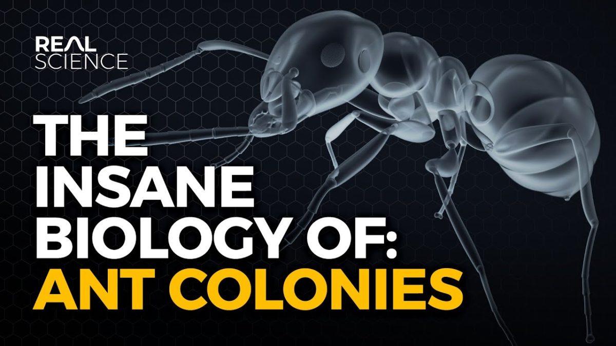 Was sind eigentlich Ameisenkolonien?