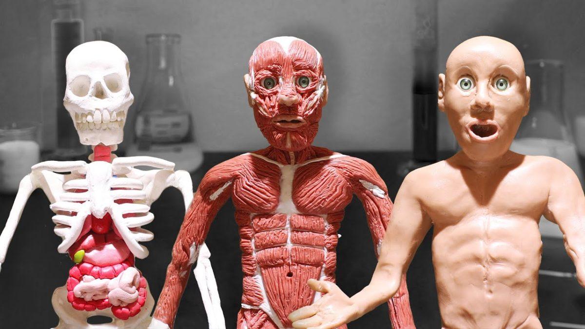 """Im Stop-Motion-Film """"The Scientist"""" baut jemand schichtweise aus Knete einen lebenden Menschen"""