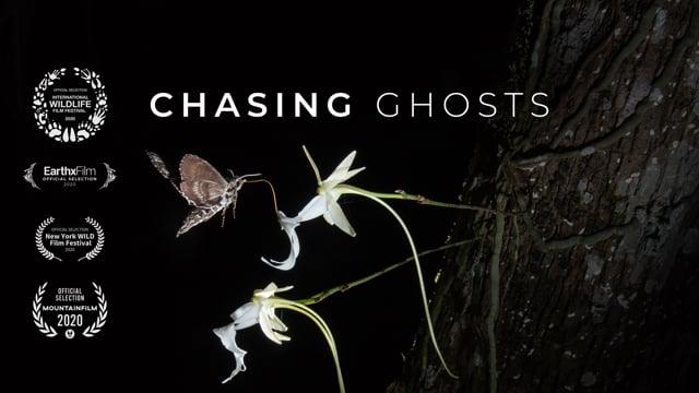 """""""Chasing Ghosts"""" – Auf der Suche nach dem Bestäuber der Geisterorchidee"""